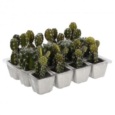 Cactus pvc 14cm 3 modelos surtidos