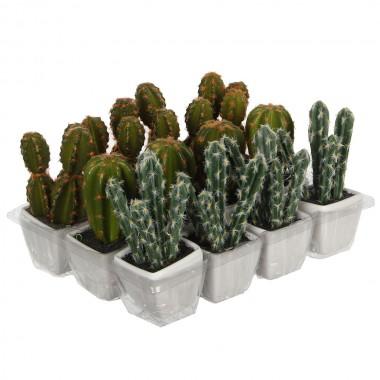 Cactus pvc 14cm surtido 3